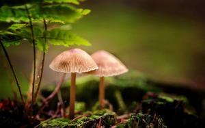 清新绿色养眼野蘑菇图片大全电脑壁纸