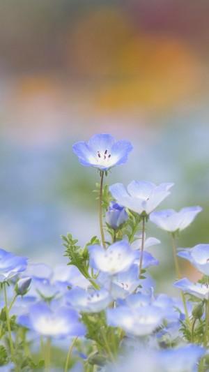 清新雅致的花卉微距图片手机壁纸