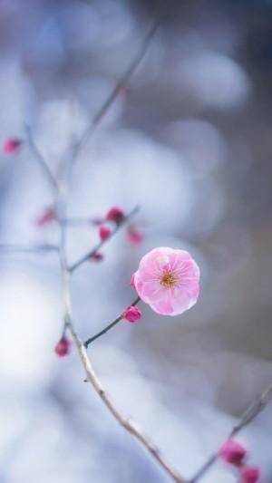 清新好看花卉图片手机壁纸