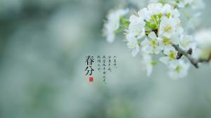 淡雅白花素净唯美春分节气高清桌面壁纸