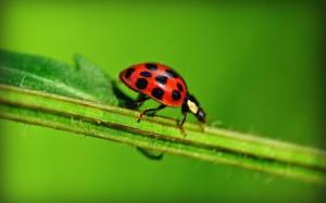 唯美的昆蟲世界