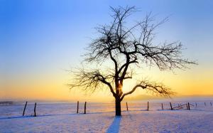 二十四节气之小雪无限风光图片