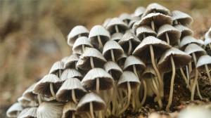 漂亮的野生蘑菇种类图片大全高清