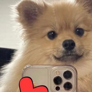 可爱小狗自拍图片