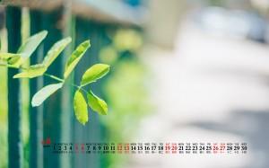 2020年9月蒲公英花朵柠檬清新桌面日历壁纸
