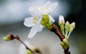 走进四月,走进春天