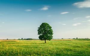 清新护眼大树的绿色风景桌面壁纸