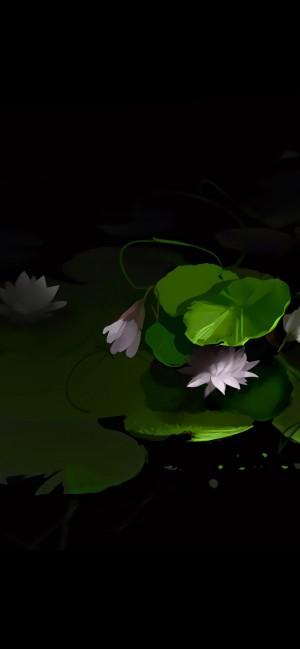 黑色背景植物个性插画高清手机壁纸