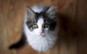 温顺可爱的猫咪高清图片