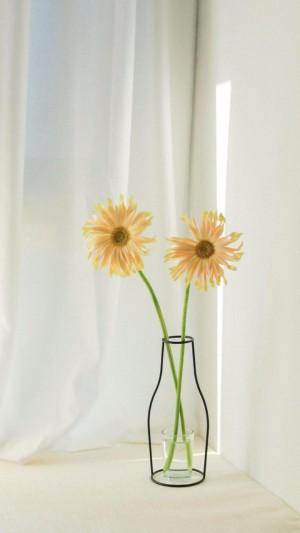 清新插花唯美植物图片壁纸