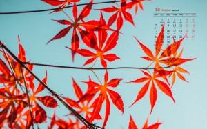 2019年10月超美枫叶日历壁纸图片
