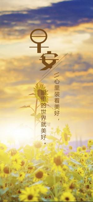 早安 一片金黄色的向日葵图片