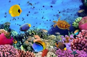 美妙的海底世界手机壁纸