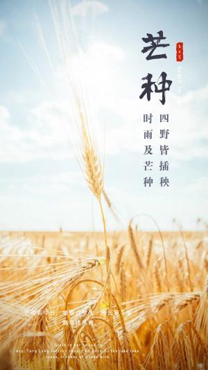 二十四节气中的第9个节气芒种农民收麦忙