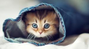 超萌超可爱的小猫咪桌面壁纸
