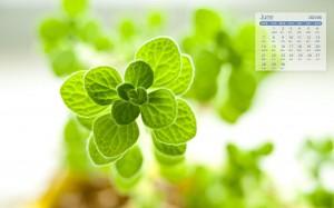 2021年6月清新养眼小盆栽植物日历壁纸