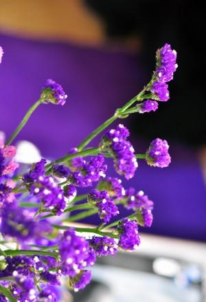 紫色勿忘我花卉