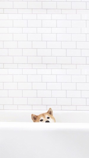 可愛呆萌的寵物狗狗小清新搞怪寫真圖片