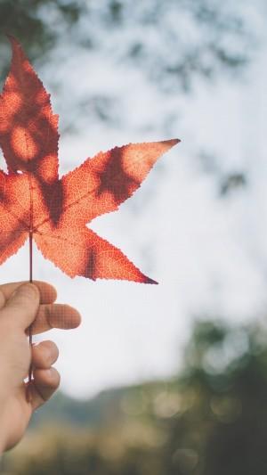 秋分之枫叶