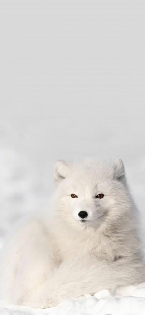 软萌可爱动物摄影高清手机壁纸