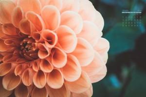 2021年1月唯美花卉日历壁纸