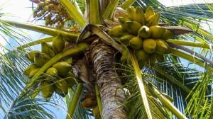 高大椰子树唯美风景