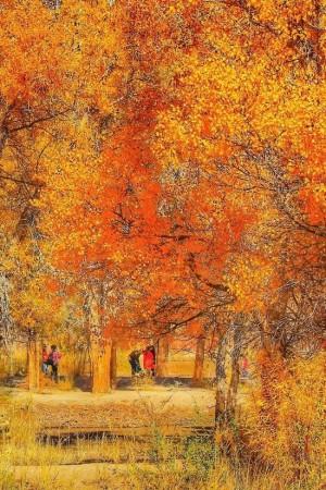 额济纳的秋天
