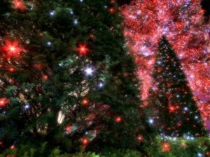 圣诞夜景 第一辑