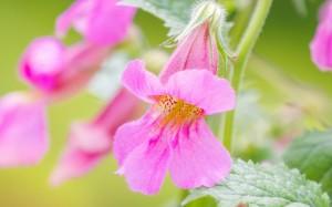 微距摄影的花花世界