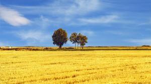 秋天唯美风景自然风光图片壁纸