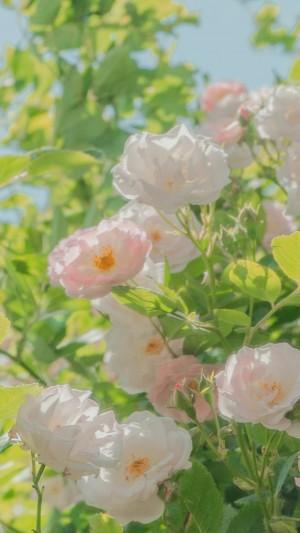 小清新雅致花卉手机壁纸