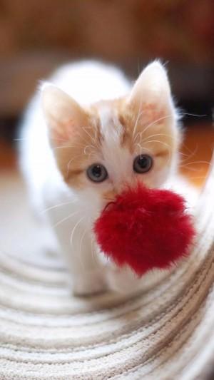 软萌可爱的猫咪图片壁纸