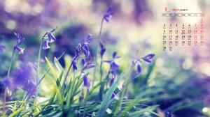 2020年3月养眼花卉植物桌面日历壁纸