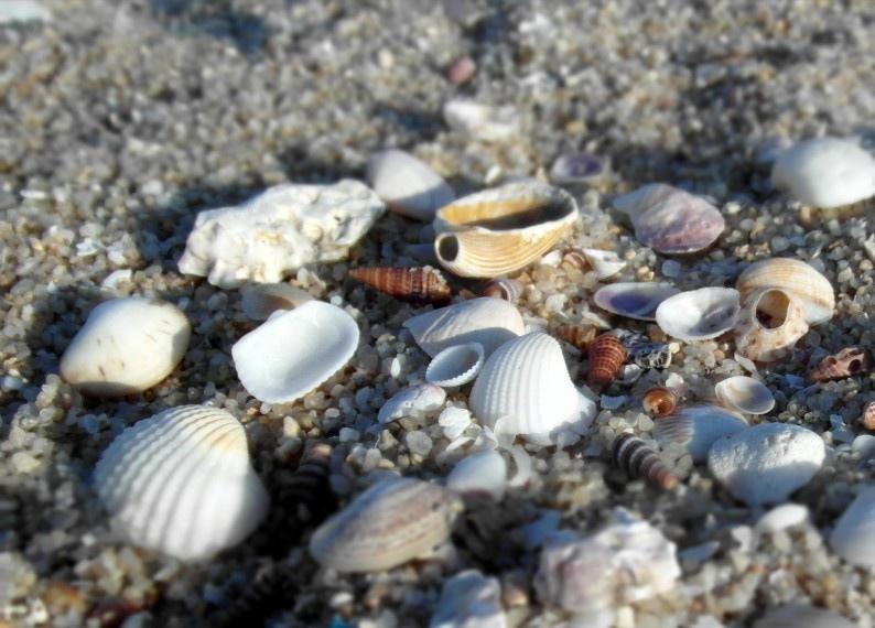 美丽贝壳堆写真