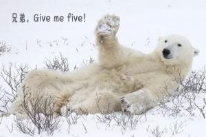 北极熊搞笑卖萌姿势带字喜感十足图片