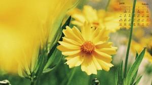 2021年6月黄色小清新金鸡菊日历壁纸图片