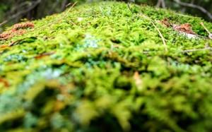 翠绿养眼的青苔美景