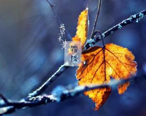 霜降草木黄