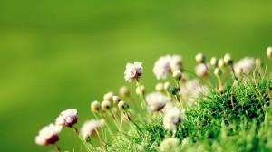 唯美植物花卉摄影图片电脑壁纸