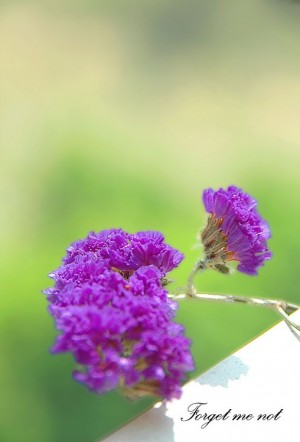 小清新紫色勿忘我
