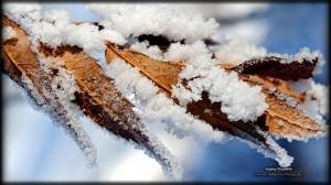冬季花园动人雪景高清桌面壁纸