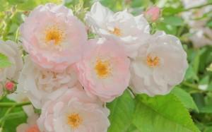 夏日清新花卉绿植唯美图片桌面壁纸