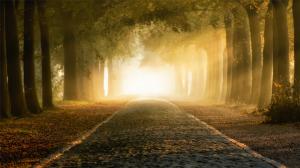 秋天森林树木风景图片桌面壁纸