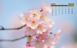 2020年6月清新雅致桃花唯美摄影日历