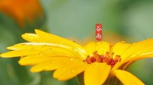 谷雨季节,绵绵细雨