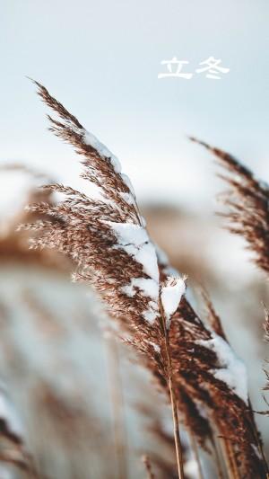 立冬之秋收東種