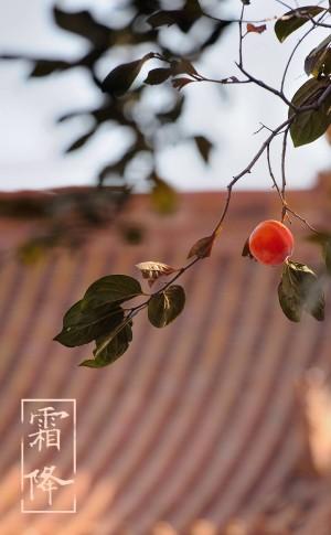 霜降屋顶上的红果实