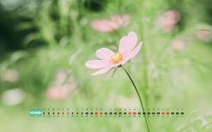 2020年9月护眼小清新植物图片桌面日历壁纸