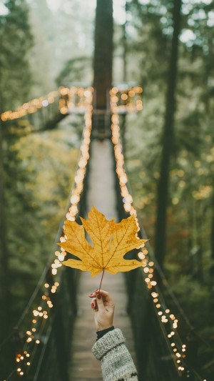 爱上秋天,爱上美丽的枫叶