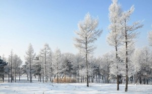 漠河的美丽雪景